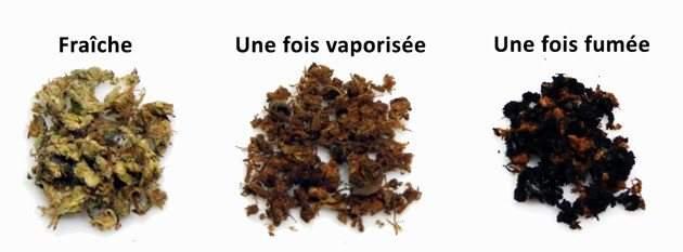 Comparaison entre dela Weed fraîche, de la Weed vaporisée de la Weed fumée
